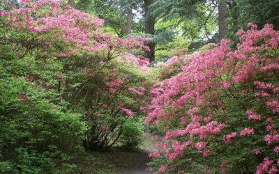 Amoureux De Jardins Regroupe L Actualite Jardin Le Coin Des Aromates
