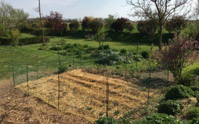 Un potager au fond du jardin